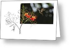 White-bellied Emerald Greeting Card