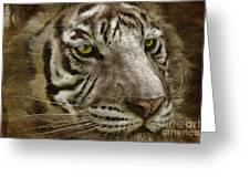 White Bengal Greeting Card