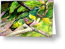 White-bibbed Fruit Dove  Greeting Card