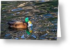 White-bibbed Mallard Greeting Card