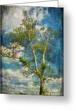 White Birch In May Greeting Card