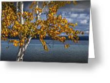 White Birch Tree In Autumn Along The Shore Of Crystal Lake Greeting Card