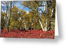 White Birches Of Fall Greeting Card