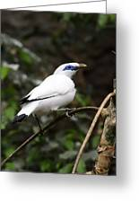 White Bird Greeting Card