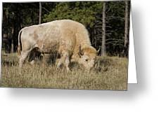 White Bison Symbol Of Hope And Renewal Greeting Card