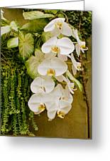 White Blooming Trail Greeting Card