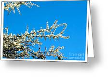 White Blossoms Blue Sky Greeting Card