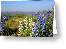 White Bluebonnets Greeting Card