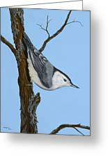 White Breasted Nuthatch Greeting Card