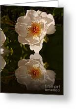 White Briar Rose Reflection Greeting Card