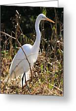 White Brilliance Of The Egret Greeting Card