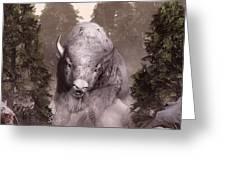 White Buffalo Greeting Card by Daniel Eskridge