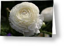 White Buttercup - Ranunculus Greeting Card