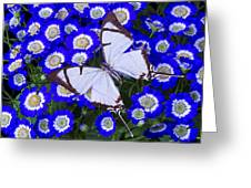 White Butterfly On Blue Cineraria Greeting Card