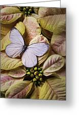 White Butterfly On Poinsettia Greeting Card