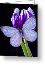 White Butterfly On Purple Tulip Greeting Card
