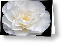 White Camellia Flower Greeting Card