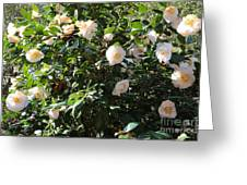 White Camellias Greeting Card by Carol Groenen