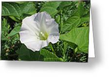 White Candour Greeting Card
