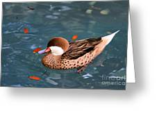 White-cheeked Pintail Greeting Card