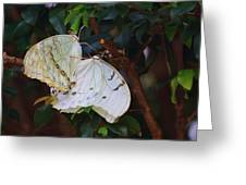 White Greeting Card