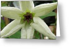White Clematis Greeting Card