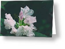 White Cloud Azalea  By Zina Zinchik Greeting Card