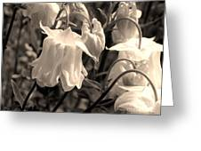 White Columbine Lanterns Monochrome Horizontal Greeting Card