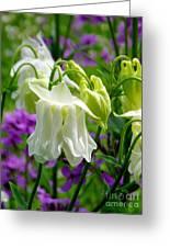 White Columbine Lanterns Verticle Greeting Card