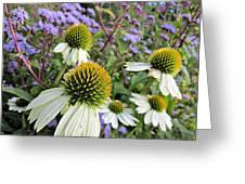 White Coneflowers Greeting Card