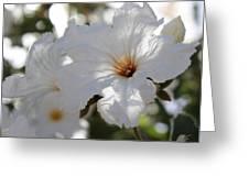 White Cordia Greeting Card