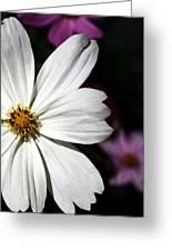 White Coreopsis Greeting Card