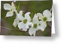 White Cross Flowers Greeting Card