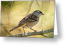 White-crowned Sparrow Pictures 63 Greeting Card