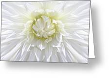 White Dahlia Floral Delight Greeting Card