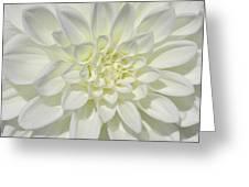 White Dahlia Square Greeting Card