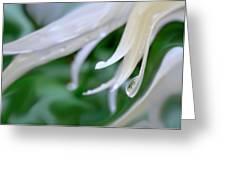 White Daisy Petals Raindrops Greeting Card