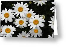 White Daisy's On The Rim Greeting Card