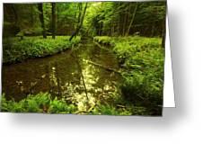 White Deer Creek Greeting Card