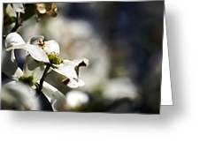 White Dogwood Flowers Greeting Card
