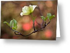 White Dogwood In Early Spring Greeting Card