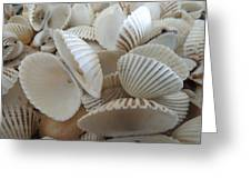 White Double Ark Shells Greeting Card