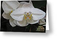White Dream Orchid Greeting Card