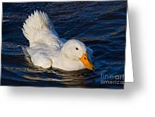 White Duck 2 Greeting Card
