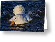 White Duck 3 Greeting Card