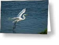 White Egret Landing Greeting Card