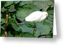 White Egret On Lilypads Greeting Card