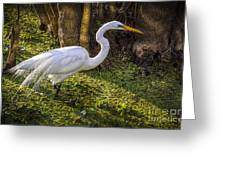White Egret On The Hunt Greeting Card
