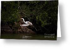 White Egret's Approach   #0615 Greeting Card