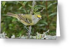 White-eyed Vireo Greeting Card